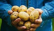 1 Milyon 300 Bin Ton Patates Depolarda Çürüyor...