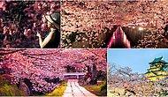 Özge Selçuk Bozkurt Yazio: Sakura Zamanı