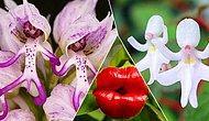 Bazısı Çıplak Erkeğe Benziyor, Bazısı Yarasaya! Çoğuna Türkiye'de Rastlayamayacağınız En İlginç Çiçekler