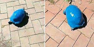 Antalya'da Kaplumbağaya Boyalı Eziyet: Maviye Boyadılar!
