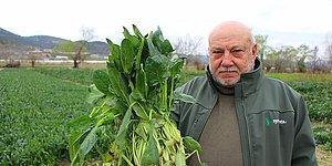 Ispanaklarını Satamayan Çiftçi: 'Benim Ispanağımı da Satın Alıp Halka Dağıtsınlar'