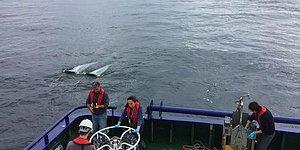 12 Balık Türünde Tespit Edildi: Karadeniz'de 'Mikroplastik' Kirliliği