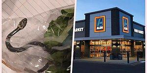 Avustralya'da Bir Çift, Marketten Aldıkları Marul Paketinden Yılan Çıktığını İddia Etti!