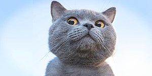 Tüylü Dostlarının Orantısız Şiddetine Maruz Kalan Kedi Sahiplerinin Yaptığı 15 Hata