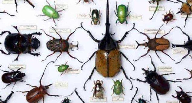 7. Direkt olarak kanla beslenen 14 bin farklı böcek türünün bulunduğu tespit edilmiştir.