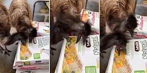 Mama Poşetlerinin Üzerindeki Fotoğraflarını Mama Zannedip Yemeye Çalışan Hayvanların Moral Bozan Görüntüleri