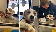 Barınaktan Sahiplendirileceğini Anlayan Köpeğin Aşırı Mutlu Olduğu Anlar