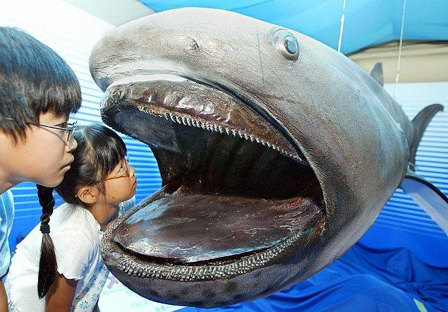 5. Dev ağızlı köpek balığı