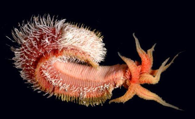 1. Pompei-Worm