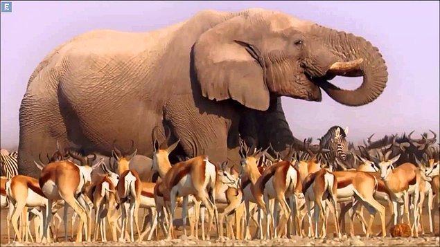 3. Africa