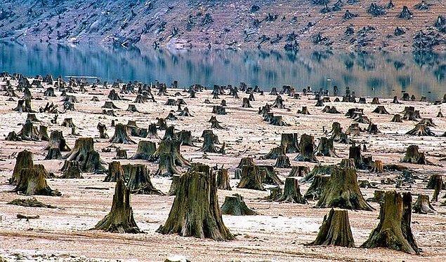6. Willamette Ulusal Ormanı, Oregon: Popular Media Center'a göre rezervuar gelişimi için düzlenmiş eski bir orman.
