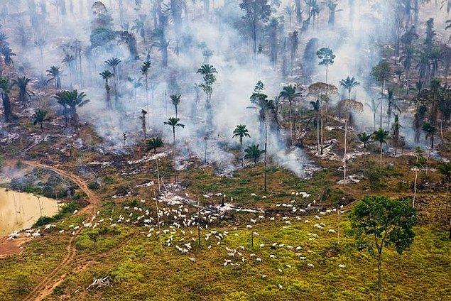 10. Brezilya: Yer açmak için yakılmış Amazon ormanları.