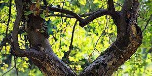 Günlük Alışkanlıklarına Göre Doğayı Ne Kadar Sevdiğini Söylüyoruz!