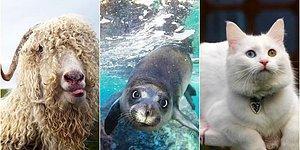 Ülkemizin Endemik Hayvan Türlerine Ne Kadar Hakimsin?