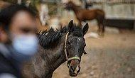 İBB'nin Hibe Ettiği Atların Nasıl 'Kaybolduğu' Ortaya Çıktı