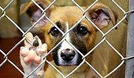 Hayvanlara Kötü Muamelenin Cezası 6 Aydan 5 Yıla Çıkarılıyor! Ama İngiltere'de...