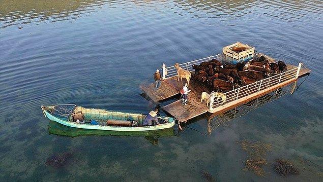 Mada Adası Sakinleri Yaylalara Gitmeye Hazırlar