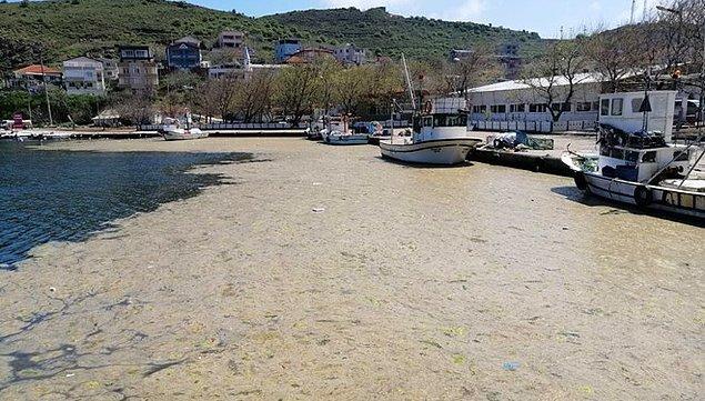 Marmara Denizi'ne girmek sağlıklı mı?