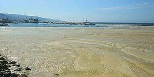 Marmara Denizi'nin Birçok Noktasına Yayılan 'Deniz Salyası' Mudanya Sahilini de Kapladı
