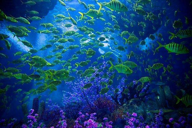 'Mercan Yıldızları, balıklara büyümeleri için yer sağlayan güçlü ve dengeli bir platform'