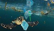 Plastik Kirliliği Akdeniz'de Kimyasal Düzeylere Ulaştı: Caretta Carettalar Birer Birer Ölüyor