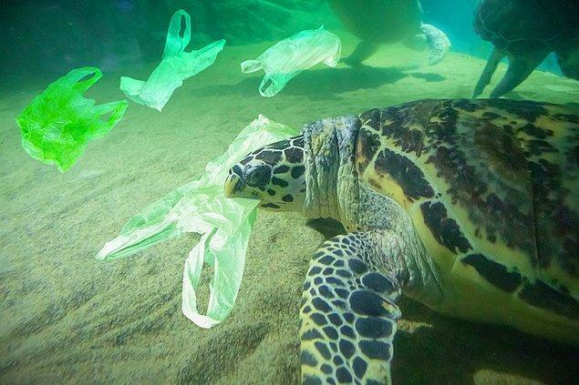 'Kaplumbağalar, plastik atıkları gerçek yiyeceklerle karıştırıyorlar'