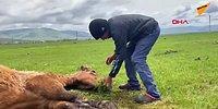 Ayağı Kırıldığı İçin Hareket Edemeyen ve Beslenemeyen Atı Elleriyle Ot Yolup Besleyen Çocuklar