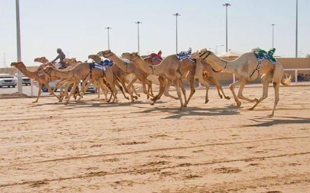 14. En büyük eğlenceleri deve yarışlarıdır ve develerin bir tanesi ortalama 400 bin dolardır.
