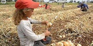 Tarım İşçisinin Kızı: 'Babam İşsiz Kalınca Telefonunu Sattı, Derse Katılamadım, En Sevdiğim Ders Matematik'