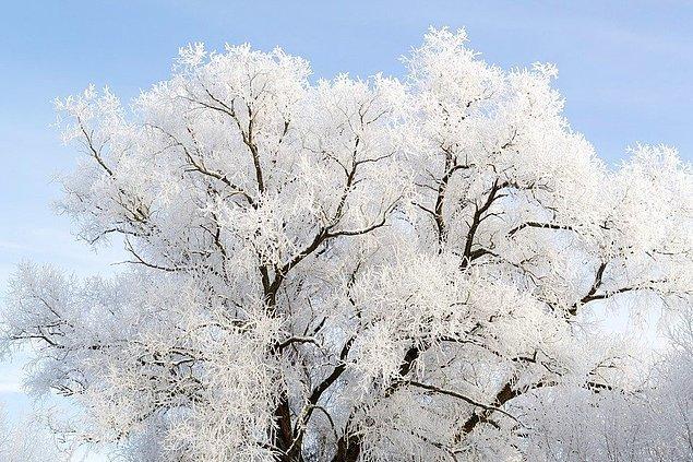 7. Lökofobi: Beyaz renkten korkma