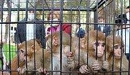 Sınırda Ele Geçirilen 12 Maymun, Gaziantep Hayvanat Bahçesi'ne Getirildi