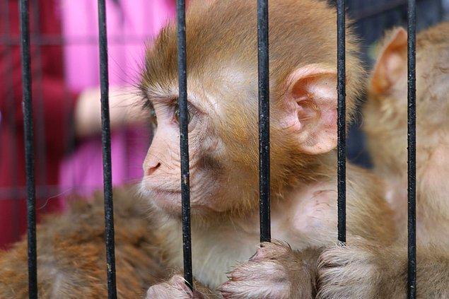 """""""Son zamanlarda yasa dışı yollarla çok sayıda hayvan yakalanmaya başlandı"""""""