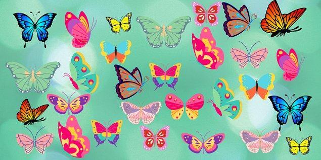8. Hangi kelebeğin çifti yoktur?