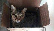 Kedilerin Kutu Sevgisi Bilimsel Araştırma Konusu Oldu: 'Hayali Kutularda Bile Oturuyorlar'