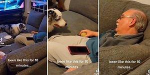Top Getirme Oyunu Oynarken Uyuyakalan İnsan Dostunu Sabırla Bekleyen Köpek