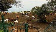 Adaların Kayıp Atları ile İlgili Yeni İddia