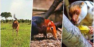 Doğanın Eşsizliğini Gözler Önüne Seren Dünyanın En Nadir 30 Hayvanı
