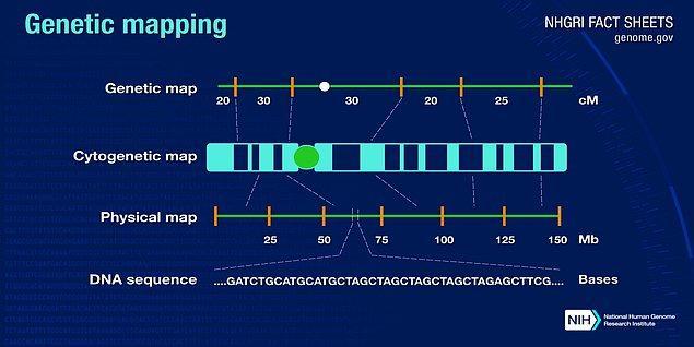 Proje, sahip olduğumuz genomları 3 ayrı yol izleyerek çözümlemeyi hedefliyordu; genom DNA'sındaki bazların sırasının belirlenmesi, genlerimizin bulunduğu yeri gösteren haritanın yapılması, kalıtsal özelliklerden hangilerinin nesiller boyu takip edilebileceğini simgeleyen bağlantı haritalarının yapılması...