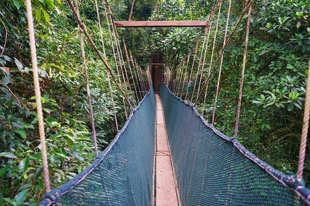 18. Kanopi Geçidi - Ranau, Malezya