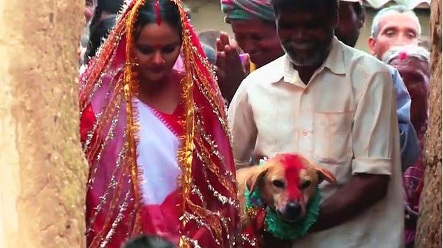 8. Kırsal bölgelerde kız çocukları bir köpekle evlendiriliyor.
