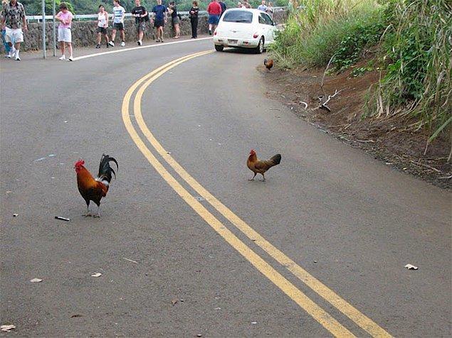 28. Tavukların Georgia'da karşıdan karşıya geçmesi yasak.