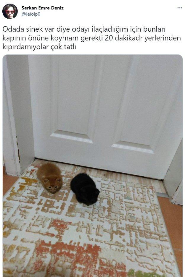 4. Kaldı mı böyle kediler?