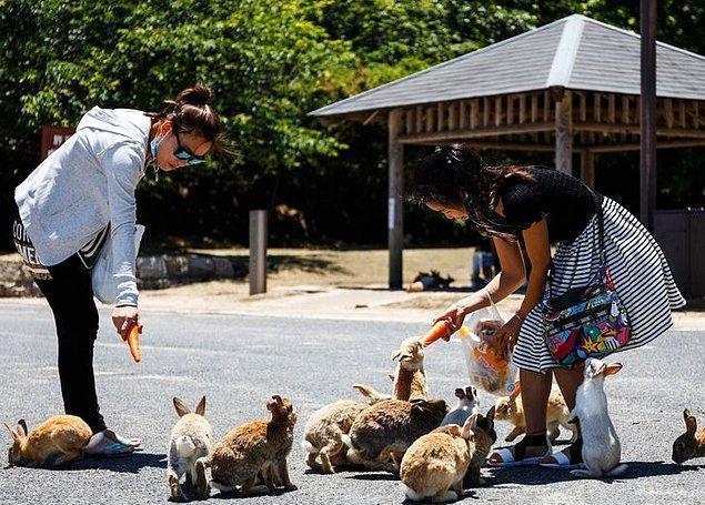 7. Küçük bir Japon adası olan Okunoshima yüzlerce yabani tavşana ev sahipliği yapıyor.