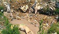 Suç Duyurusunda Bulunuldu Ama! Sakarya'da Bir Çöplükte 17 Köpek Ölüsü Bulundu