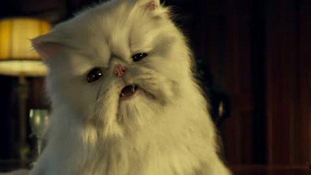 """5. """"Bir çift kedileri yüzünden boşandı. Kadın, kediye beyaz kürkünden dolayı Kartopu ismini uygun buldu ve sadece ıslak kedi mamasıyla beslenmesinin daha sağlıklı olacağını söyledi. Adamsa, kediye Zambak ismini daha çok yakıştırdı ve sadece kuru kedi mamasıyla beslenmesinin daha mantıklı olduğunu savundu. Kedinin velayeti üzerine bir yılı aşkın süre tartıştılar ve bu süreçte kendi oğulları umurlarında bile değildi."""""""