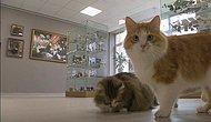 Türkiye'nin ilk Kedi Müzesi Eskişehir'de Açılıyor