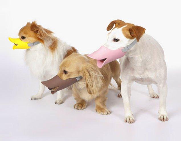 11. Köpekleri ördeğe benzeten alet