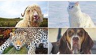 Ülkemizde Yaşayan Bu Hayvanlardan Hangisinin Neslinin Tükenmekte Olduğunu Bulabilecek misin?