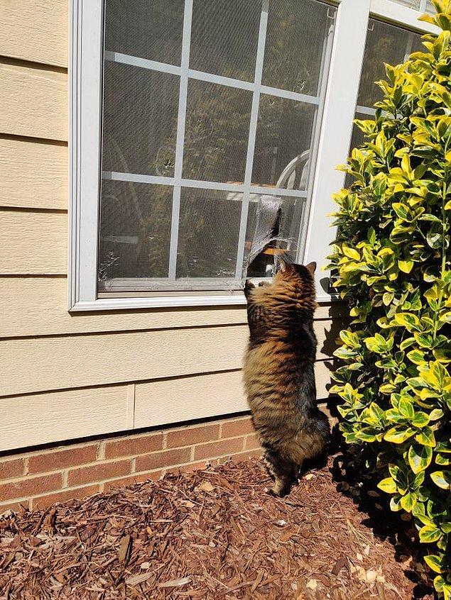 """8. """"Kedim cama bir delik açmış, eve girip çıkmak için kullanıyor."""""""