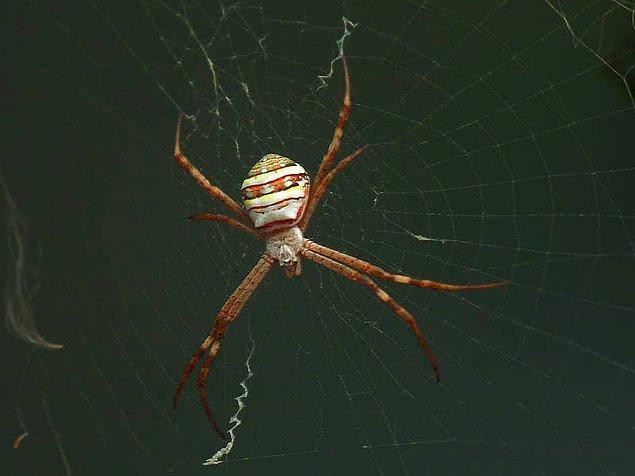 """11. """"Örümcek fobim var ve düşünülenin aksine Avustralya'da iki hafta kalmama rağmen 1 tane bile örümcek görmedim."""""""